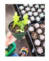 Florida Cactus Inc.
